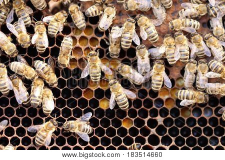 some honey bees are working in a beehive