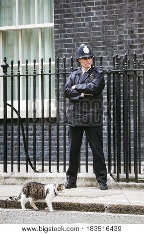 10 Downing Street Chief Mouser Cat