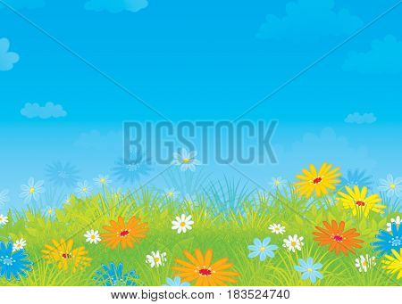 Colorful illustration of a sunny meadow with wildflowers