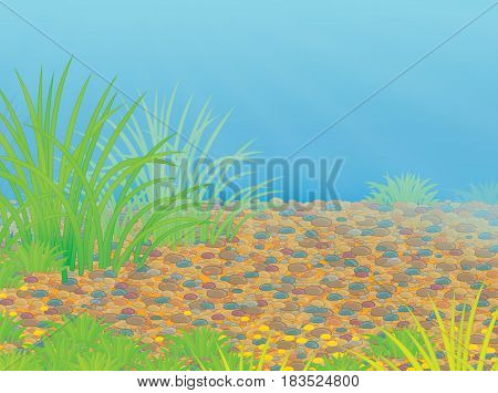 Colorful illustration of a seabed with green water plants