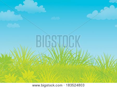 Illustration of a sunny meadow with wild plants