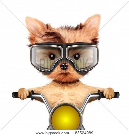 Funny biker dog sitting on a chopper wearing googles. Fast city transport concept. Realistic 3D illustration of yorkshire terrier with clipping path