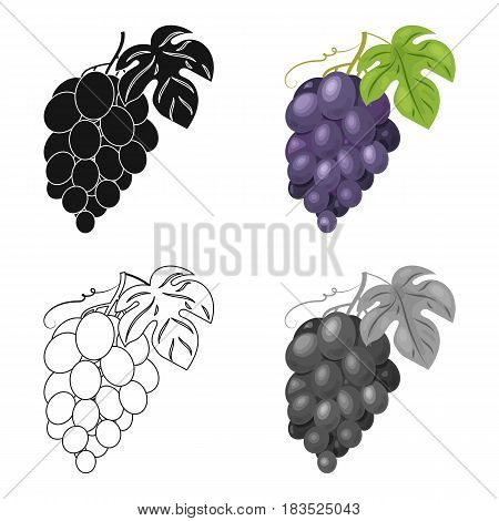 Bunch of grapes icon in cartoon design isolated on white background. Wine production symbol stock vector illustration.