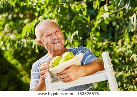 Senior man pleased with apple harvest in autumn