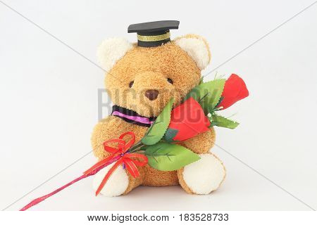 Brown bear wearing a graduation cap and red roses on a white background.