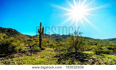 Bright sun rays over the Desert Landscape and a Saguaro Cactus in South Mountain Park in Maricopa County near the city of Phoenix, Arizona, USA