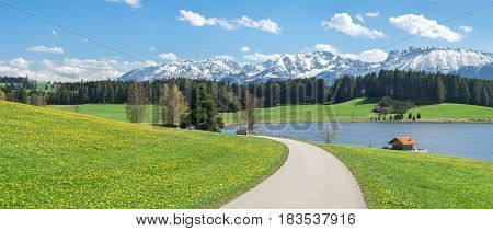 Narrow road or path crosses a beautiful Dandelion flower meadow at lakeside and snow covered mountains in springtime. Location Bavaria, Alps, Allgau, Germany. Fresh green grass, blue water and sky, white mountains and clouds and a cabin.