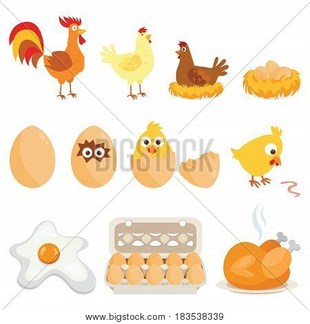 Set of farm animals, vector stickers with chicken family on white isolated background. Vector illustration