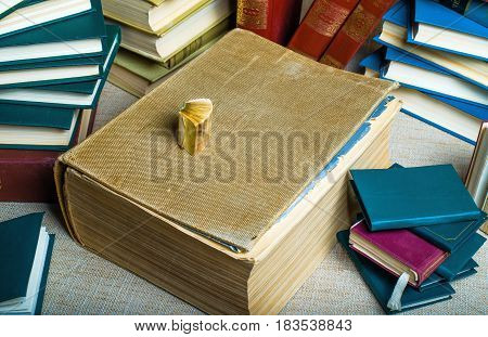 Frame filled by a large very thick ancient book it is a very small walnut is also an old book. They are surrounded by modern books with colorful covers.