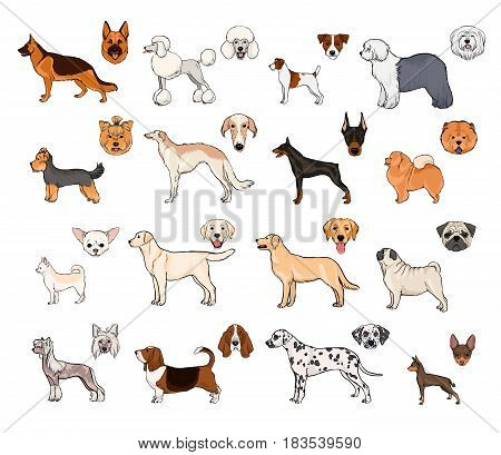 Dog breeds, side view and muzzle set. Collection with hand drawn colorful realistic illustration