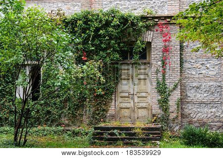 Old door to the house woven with wild grapes
