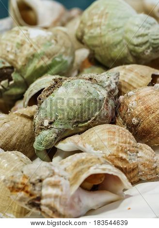 Freshly Caught Whelks On Ice For Sale At Market
