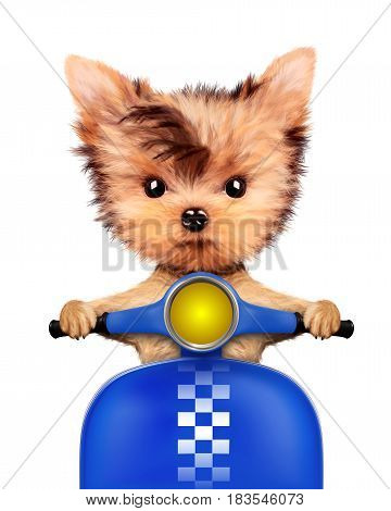 Funny adorable puppy sitting on a blue motorbike, isolated on white. Delivery concept. Realistic 3D illustration of yorkshire terrier with clipping path