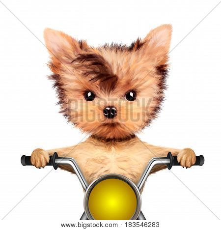 Funny biker dog sitting on a chopper. Fast city transport concept. Realistic 3D illustration of yorkshire terrier with clipping path
