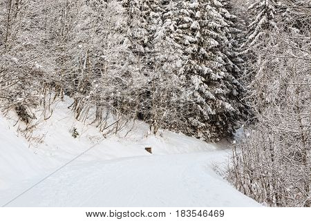 Beautiful footpath in a forest covered by snow in winter.
