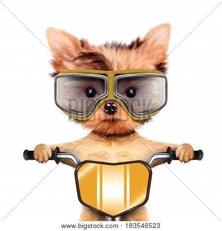 Funny racer dog sitting on a yellow bike and wearing aviator goggles. Sport and championship concept. Realistic 3D illustration of yorkshire terrier with clipping path