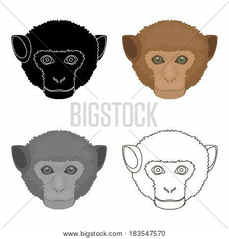 Monkey icon in cartoon design isolated on white background. Realistic animals symbol stock vector illustration.