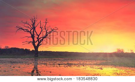 Landscape of a lonely old tree in a meadow against a background of bright sunrise. Colorful colors, tranquility, wild untouched nature. Sunbeams, red-hot sky.