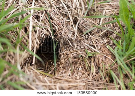 animal burrow or home underground on a hillside.
