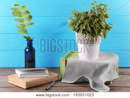 Beautiful ficus and books on blue background