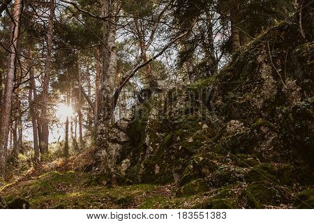 Forest landscape. Sundown in the woods. Mysterious path in the woods. Wanderlust. Beautiful forest landscape at twilight. Summer forest landscape. Mountain scene with old hut.