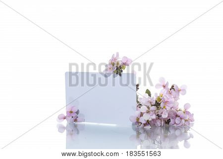 Pink little spring forget-me-nots on a white background