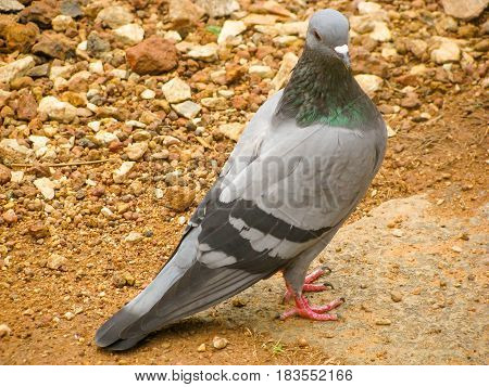 A pigeon enjoying in a city park