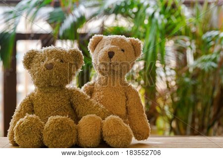 Two cute brown bears sitting on wood with blurred garden balcony background and yellow tone
