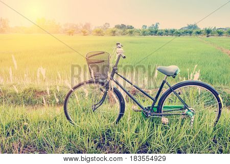 Vintage / retro color style effect : Classical japanese bicycle parks near a paddy field. A paddy field is a flooded parcel of arable land used for growing semiaquatic rice which is practiced in Asia.