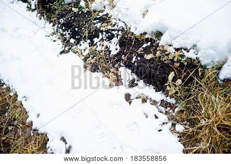 Grass under the snow in a forest ot a field.