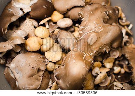 Mushrooms And Oyster Mushrooms Raw