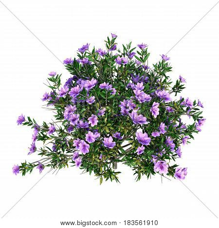 3D rendering of a rhododendron isolated on white background