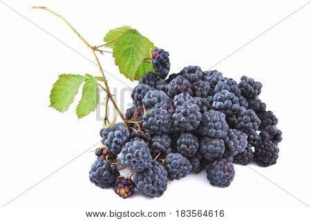 Blackberry (Rubus fruticosus) Dewberry and Raspberry fruits on white background