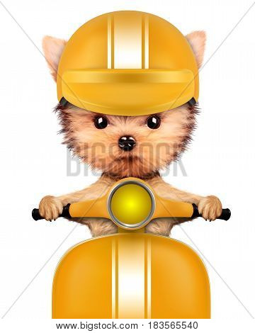 Funny adorable puppy sitting on a orange motorbike and wearing helmet, isolated on white. Delivery concept. Realistic 3D illustration of yorkshire terrier with clipping path