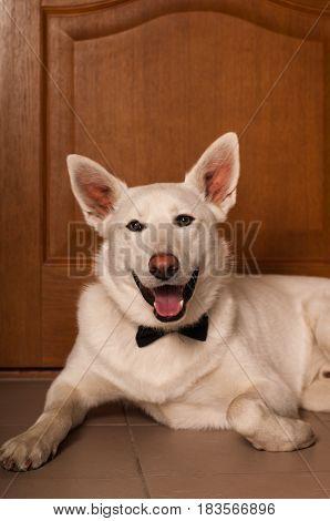 White Mixed Breed Dog At Studio