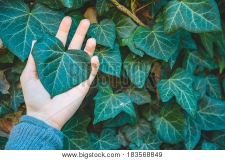 leaf in woman hand close up with leaves on background
