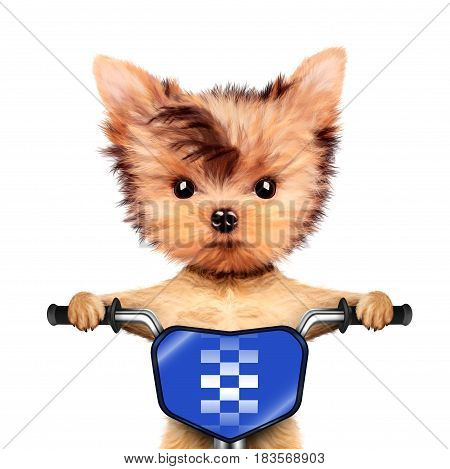 Funny racer dog sitting on a blue bike. Sport and championship concept. Realistic 3D illustration of yorkshire terrier with clipping path