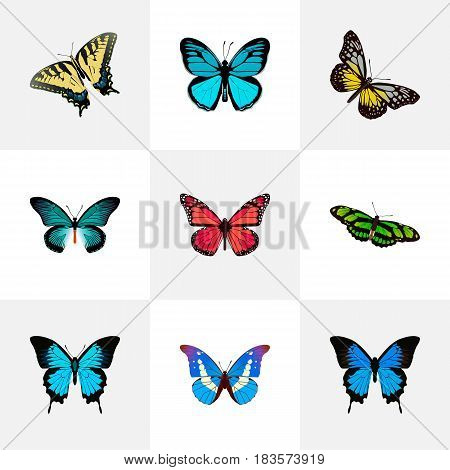Realistic Common Blue, Green Peacock, Checkerspot And Other Vector Elements. Set Of Beautiful Realistic Symbols Also Includes Beauty, Pink, Green Objects.