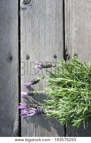 Spanish lavender stems lying sideway on pale wood planks