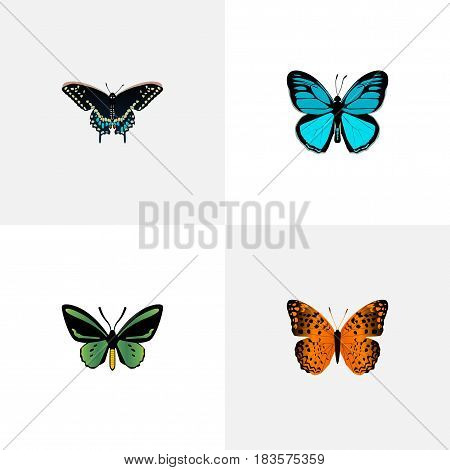 Realistic Sky Animal, Danaus Plexippus, Tropical Moth And Other Vector Elements. Set Of Butterfly Realistic Symbols Also Includes Orange, Butterfly, Monarch Objects.