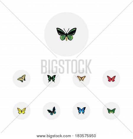 Realistic Common Blue, Birdwing, Archippus And Other Vector Elements. Set Of Beautiful Realistic Symbols Also Includes Tiger, Yellow, Pink Objects.