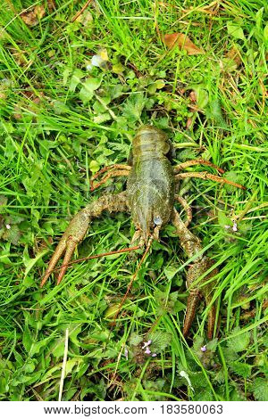 big river cancer lays on the grass