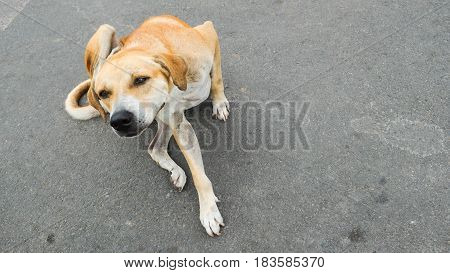 The dog is scratching on cement background The dog is playful