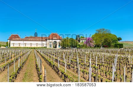 Vineyards near Saint Emilion - France, Gironde, Aquitaine