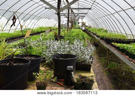 Growing season for a nursery in the hoop tunnel with seedlings.