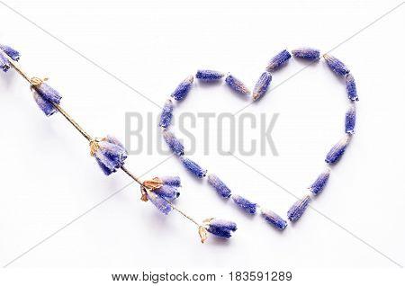 lavender flowers heart shape background, over white