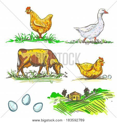 hand drawn illustration with color farm and chicken and egg, cow, goose sketches. vector set