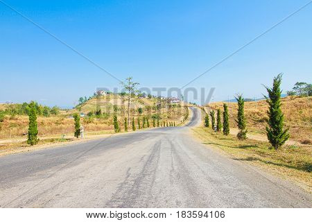 Gravel road between trees in the countryside on sunny day