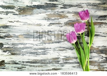 Beautiful lilac tulips on shabby wooden background