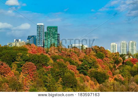 amazing beautiful view of autumn time Toronto park with various uptown buildings on blue sky background